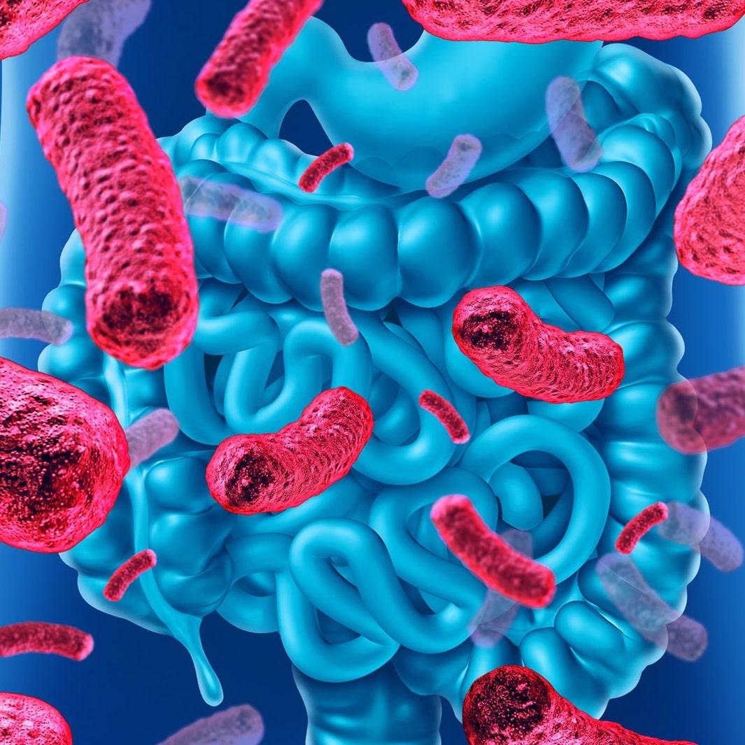 Sistema immunitario e microbiota intestinale